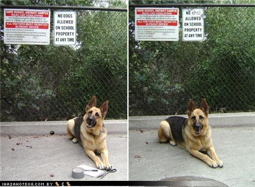 Cats correction duct tape fixed german shepherd happy dog no dogs allowed sharpie sign themed goggie week - 3963042560