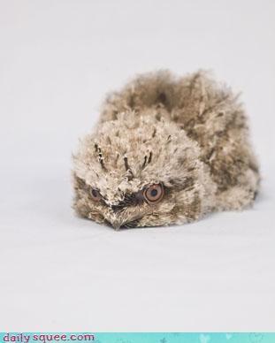 baby bird Owl - 3964435200