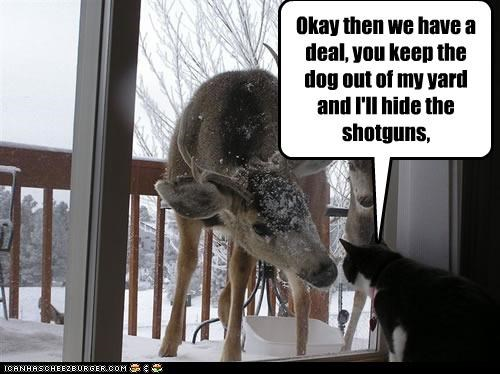 caption,captioned,cat,deal,deer,dogs,hiding,keep out,shotguns,yard