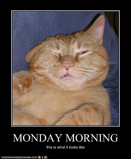 bad,caption,captioned,cat,looks like,Monday morning,unhappy