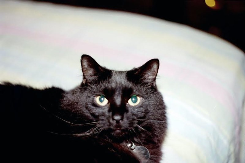 Cats featured fur monsters - 396549