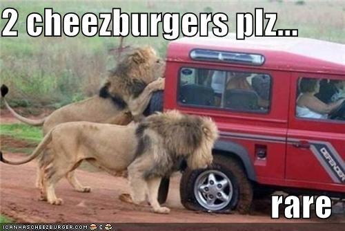Cheezburger Image 3965550080