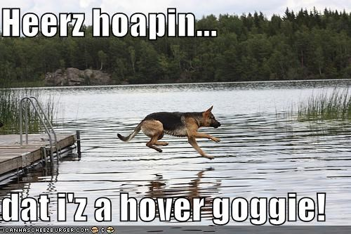 german shepherd,hope,hover dog,hovering,jumping,swimming,water