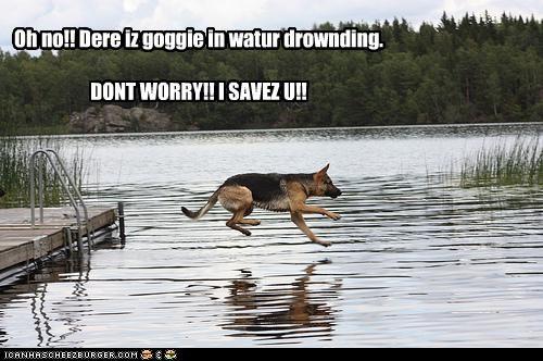 Oh no!! Dere iz goggie in watur drownding. DONT WORRY!! I SAVEZ U!!
