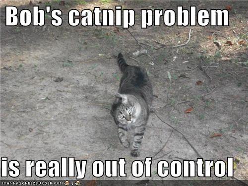 cat catnip critters pet problem - 3966125568