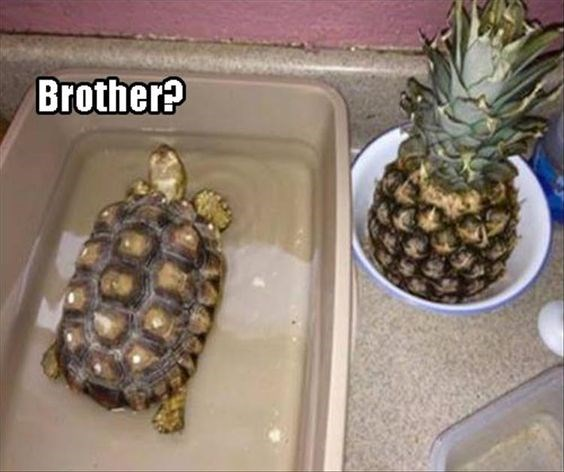 Funny turtle memes that will make you come out of your shell a bit