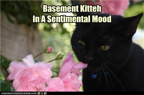 basement cat,caption,captioned,cat,cute,flowers,sentimental mood,smelling