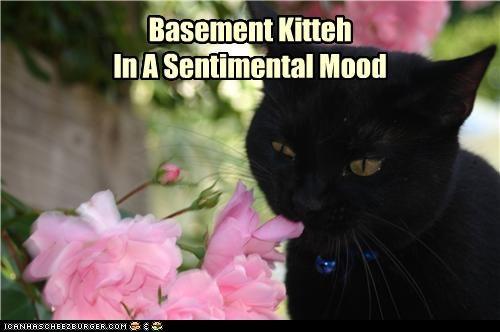 basement cat caption captioned cat cute flowers smelling - 3967885056