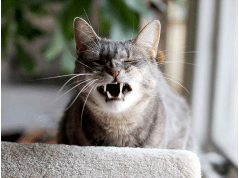 a funny list of cats sneezing
