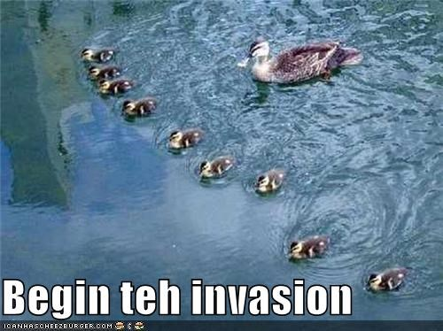 attack,begin,caption,captioned,duck,ducklings,the invasion