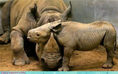 baby cute rhino - 3968607488