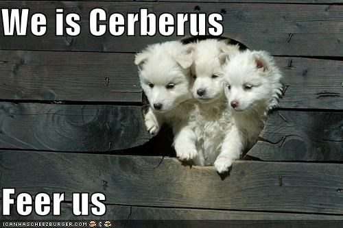 be afraid,cerberus,cute,fear,puppies,puppy,whatbreed