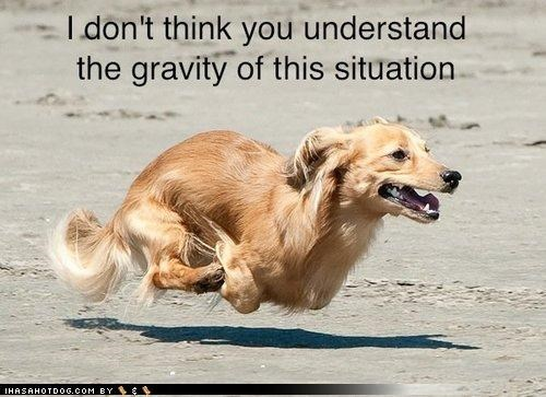 beach,collie,failure to understand,Gravity,hover dog,mixed breed,pun,running
