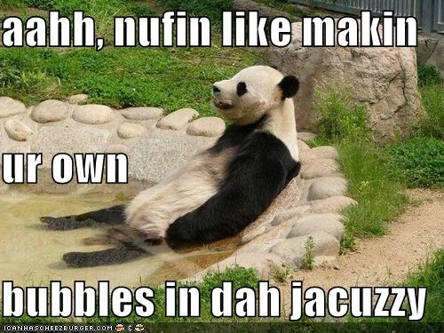 Cheezburger Image 3969128448