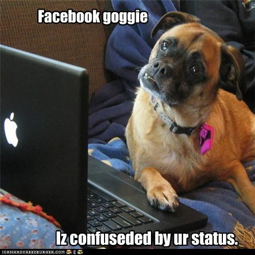 computer confused facebook reading status update whatbreed - 3969406976