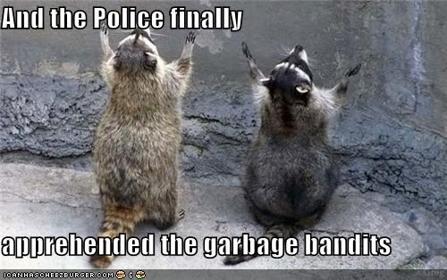 apprehended,bandits,caption,captioned,garbage,manhunt,police,raccoons