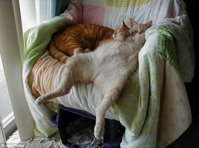 funny list of pictures of cats sleeping weird