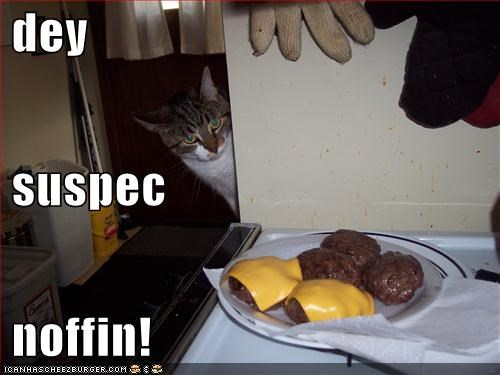 caption captioned cat cheezburgers inconspicuous noms plotting they suspect nothing wanting