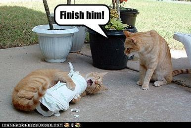 caption captioned cat directive finish him mortal combat paper towel - 3969575936