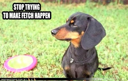contempt dachshund death glare fetch frisbee not gonna happen