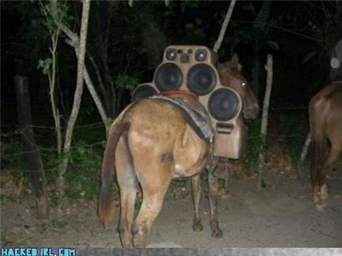 amp donkey speakers wtf