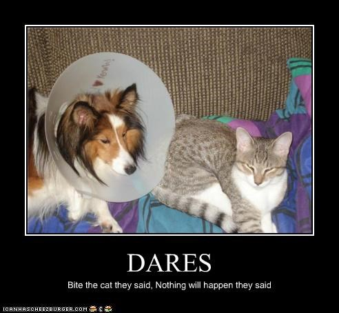 bite,cat,collie,cone of shame,dare,nothing will happen,peer pressure
