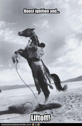 animals cowboy funny Photo photograph - 3971793664