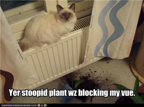 blocked,caption,captioned,cat,mess,plant,problem solved,stupid,view