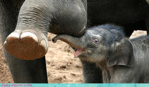 baby elephant face - 3972173568