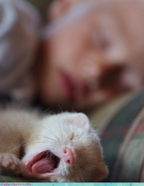 Day of Rest ferret human - 3972179712