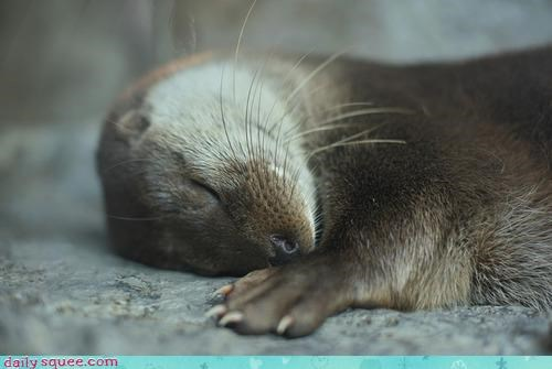 nap,otter,toes