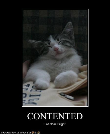 caption captioned cat contented doin it rite doing it right happy - 3972305920