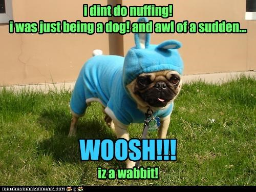 i dint do nuffing! i was just being a dog! and awl of a sudden... iz a wabbit! WOOSH!!!