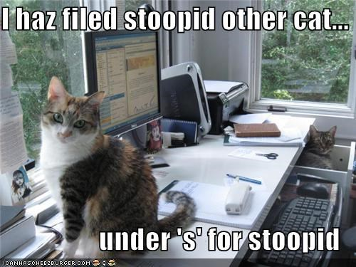 I haz filed stoopid other cat... under 's' for stoopid