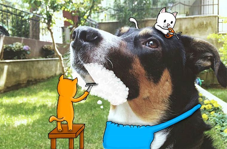 funny animal doodles on photos
