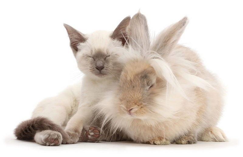 cats and bunnies sharing the same colors