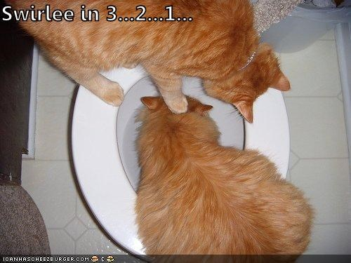 1 2 3 bathroom caption captioned cat Cats countdown swirly toilet - 3972644352