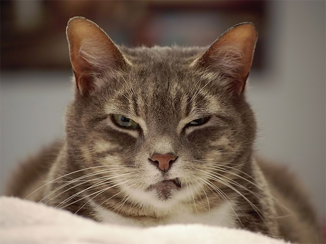 a funny list of judging cats