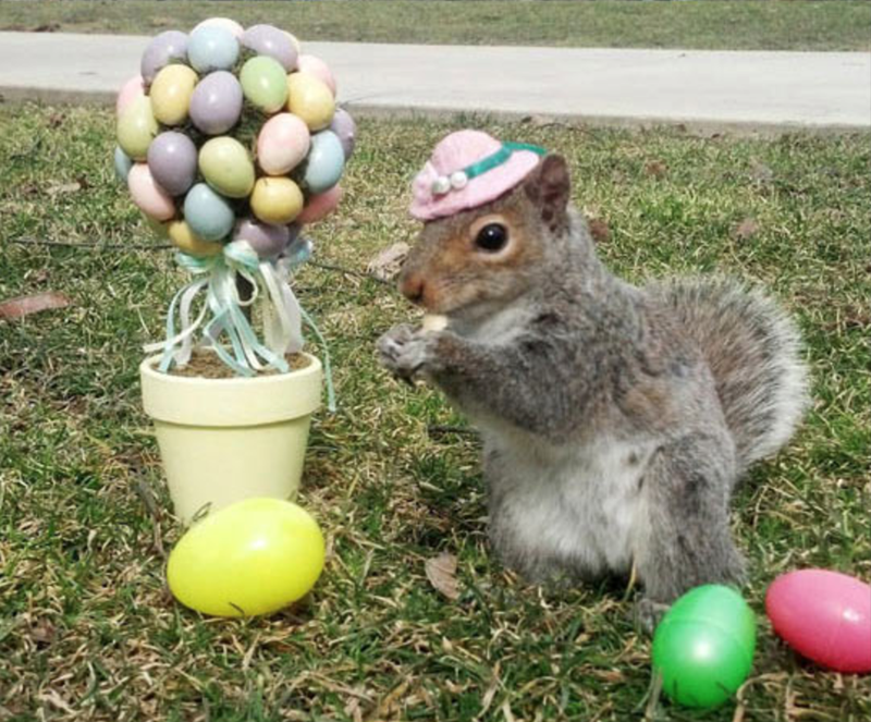 a funny list of squirrels in cute hats