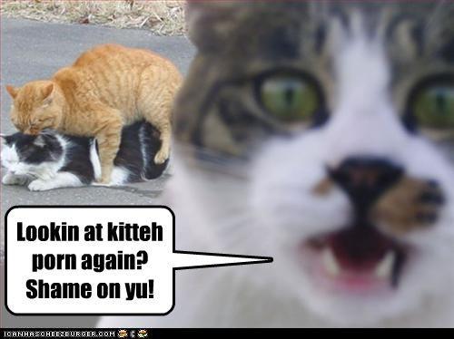 Lookin at kitteh porn again? Shame on yu!
