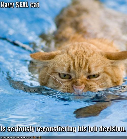 caption captioned cat decision job navy seal reconsidering second thoughts swimming upset wet