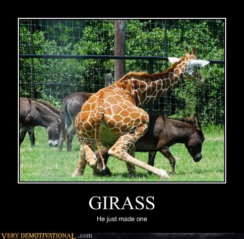 GIRASS He just made one