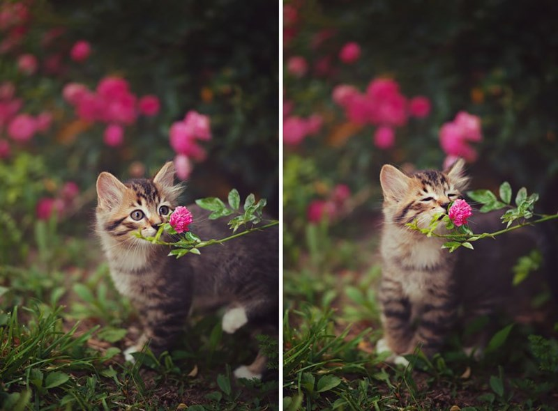 Animals Smell Flowers
