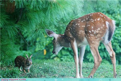 baby,deer,disney,rabbit