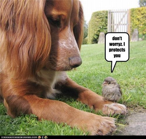 chick dont worry friendship protection sparrow whatbreed - 3976094976