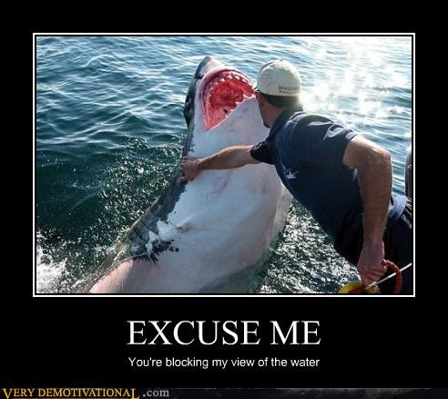excuse me wtf shark - 3976410624