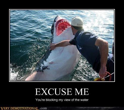 excuse me wtf shark - 3976410624