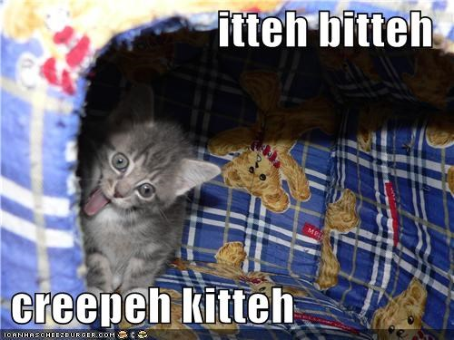 Cats itty bitty kitty committee derp pets - 3976534784