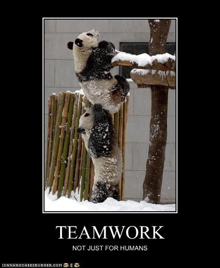 caption captioned climbing cute helping not just for humans panda teamwork - 3977517824