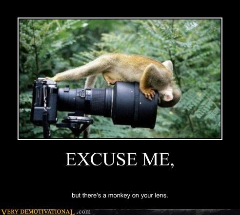 animals camera cute jungle lol monkey